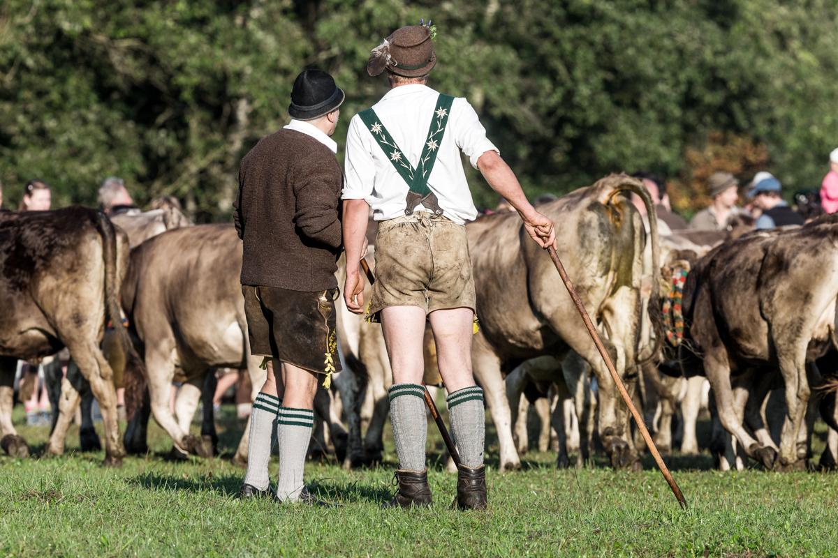 Viehscheid im Allgaeu